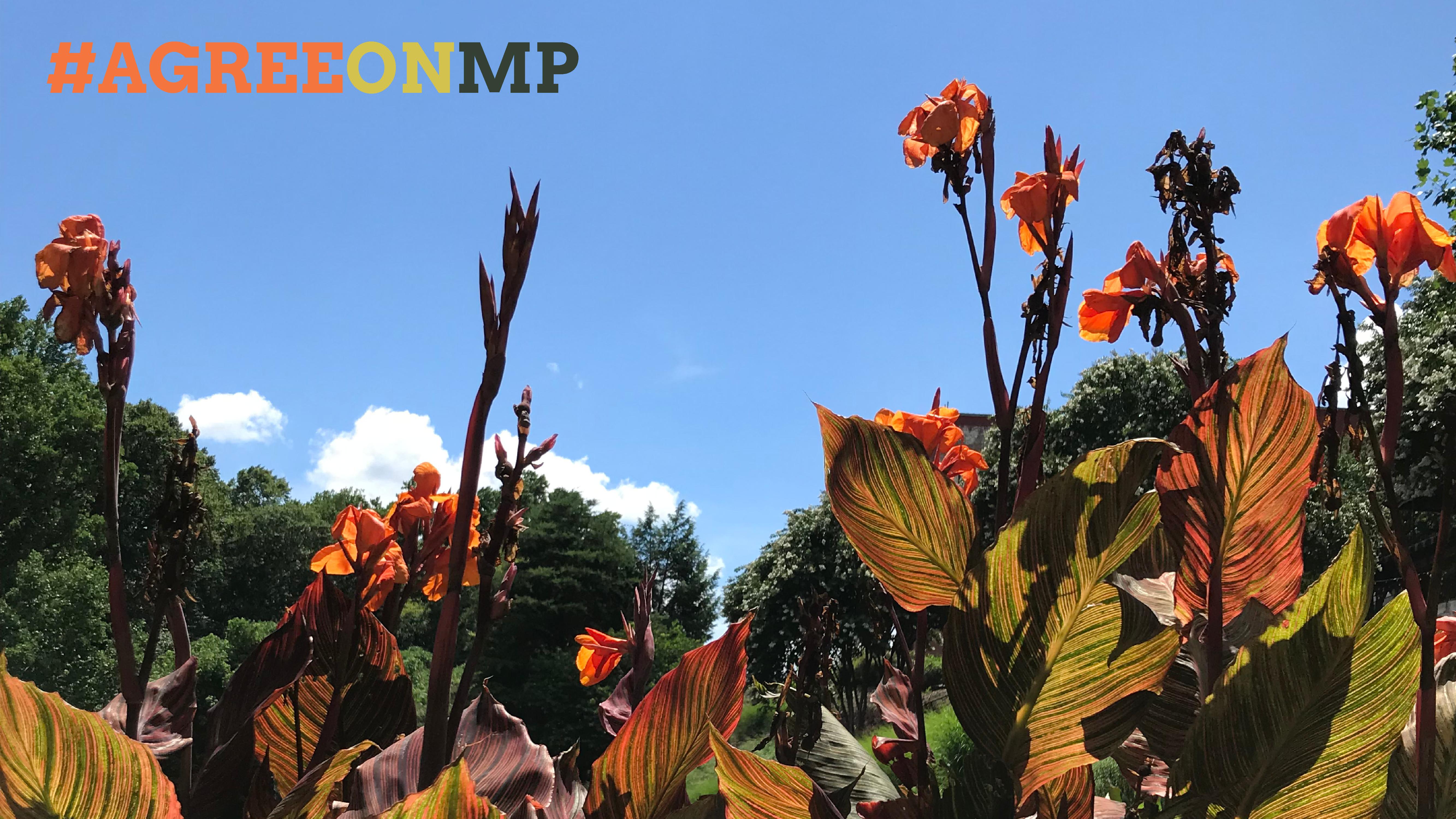MagnoliaPark_Zoom 4